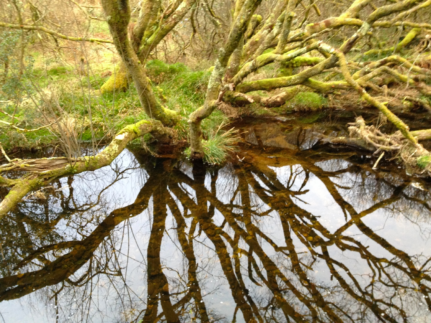 Bala Brook reflection